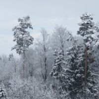 Schnee im Geerenwald